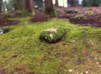 苔の絨毯(じゅうたん)